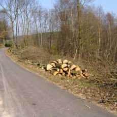 Em Holz